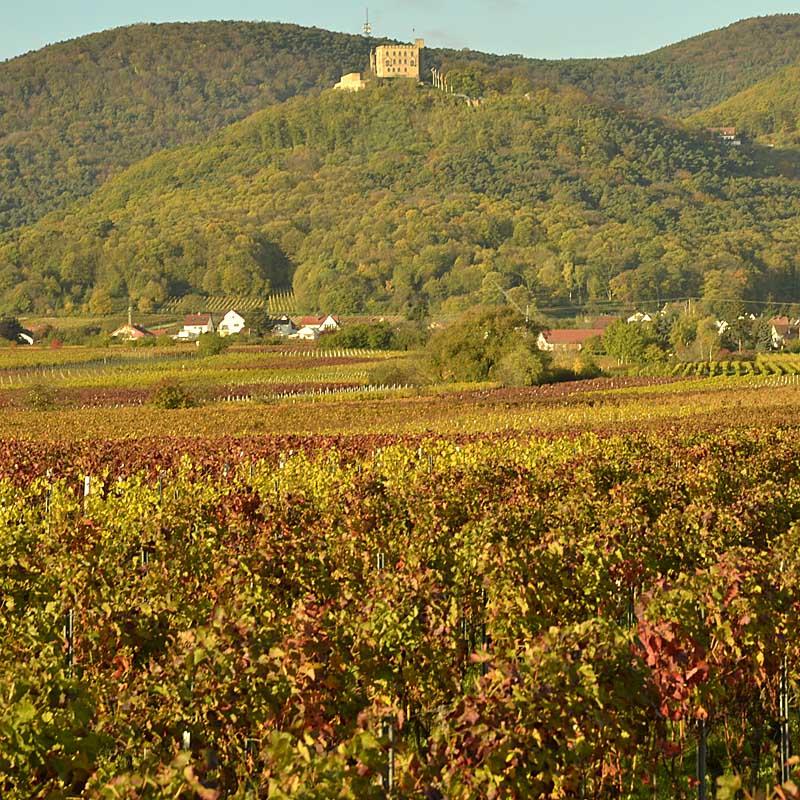Das Hambacher Schloss thront über den Weindörfern Diedesfeld und Hambach